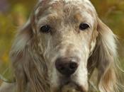 Cane caccia ucciso fucilate: ritrovato corpo campagne