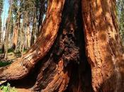 Still Words, nella foresta giganti