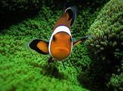 Raccolta immagini tema flora fauna marina