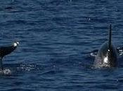 Escursioni Dolphin Watching Research alle Isole Eolie