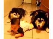 Neonato gattona, suoi cani imitano (Video)