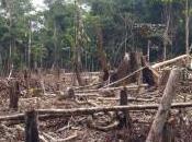Disastro ecologico Quimbo Colombia: anche l'Italia mezzo