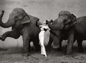 Ognuno vede elefanti modo