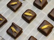 Alimentazione insetti, Francia esiste grande azienda: ecco cioccolatini all'insetto