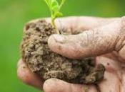Perugia 21-22 novembre: politica agricola comunitaria gestione piani sviluppo rurale