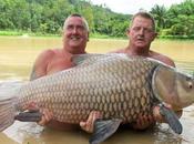 Carpa record pescata thailandia