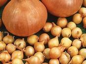 Coltivare cipolle partendo bulbilli