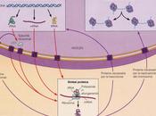 Test d'ingresso medicina: domande biologia soluzioni spiegate commentate domanda