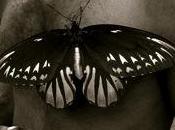 grande farfalla mondo