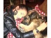"""Showgirl animaliste: Anna Falchi """"gattara"""", Alessia Reato preferisce cani"""