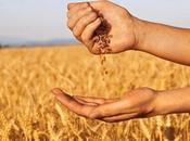 riscoperta cereali antichi filiera corta