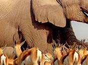 """""""Africa"""", viaggio affascinante puntate paesaggi mozzafiato creature incantevoli, stasera alle esclusiva Knowledge (Mediaset Premium)"""