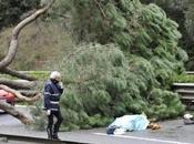 Crolla pino sulla Colombo motociclista muore. omicidio talebani degli alberi, partito trasversale atroci Roma