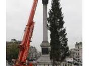 Londra, l'albero Natale Trafalgar Square (foto)