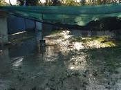 maltempo colpisce Canile comunale Pescara Cani, gatti cavalli messi salvo volontari. Medesima situazione Chieti Francavilla