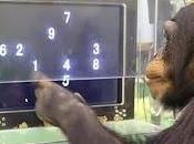 Animali meno intelligenti dell'uomo? Niente affatto!