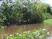 febbraio: Giornata mondiale delle aree umide