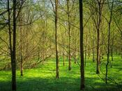 verde: natura, medicina l'alieno