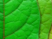 """Imprese europee sempre """"green"""". aumento l'uso efficiente delle risorse"""