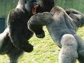 Animali forti