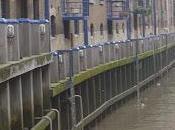 Surrey docks, pioggia fetta salmone rum.