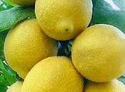 limoncello Sorrento nasce ricetta sobria genuina, arricchita acqua, alcool zucchero.