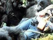 ricordo Dian Fossey: mamma gorilla africani montagna