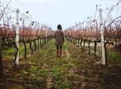 #exploringMarche Tasting Wine: Verdicchio, Rosso Conero Lacrima Morro d'Alba