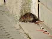 Oristano: Massama topi passeggio