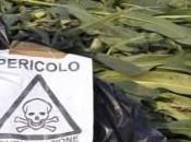 ALLARME DEGLI AMBIENTALISTI Friuli Venezia Giulia spalanca porte agli