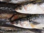PESCE AZZURRO: gustoso, nutriente economico!