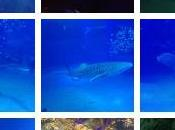 Osaka Aquarium Kayukan