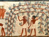 NEWS. Vino nell'Antico Egitto Alba marzo-19 maggio 2014