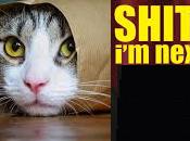 """Dopo richiesta grillina impeachment Giorgio Napolitano, panico diffonde anche cats. della Sindrome dello """"SH*T NEXT!""""."""