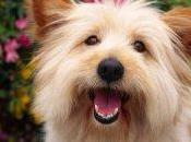 Animali, allergie floriterapia