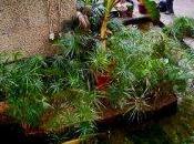 Giardino d'inverno Barbican