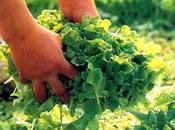 Siracusa: rubano ortaggi, arrestate persone