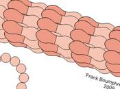 Eventi quantici, microtubuli, crionica mind uploading