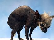 Animali strani esistono davvero: esempi