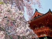Hanami, festa ciliegi fiore Giappone