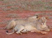 amore giraffa storia come Safari cambia vita