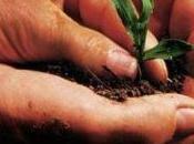 Finanziamenti agricoli: Emilia Romagna offre prestiti imprese agricole
