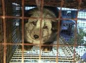 Video inchiesta Four Paws Allevamento pelliccia volpi procioni