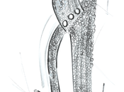 Giuseppe Zanotti disegna scarpe Bangerz Tour Miley Cyrus