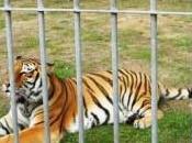 Circo Praga Muore Roberto Gerardi dopo lite animalisti