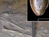 Tracce cancro scheletro nubiano