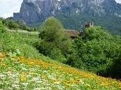 Alpe Siusi Friendly