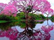 CINQUE ELEMENTI: osservi l'albero capisci fegato