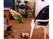 Sadie, cagnolino affamato fuggire cagnolone (video esilarante)