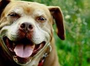 Frammenti giornata memorabile: Dogs!